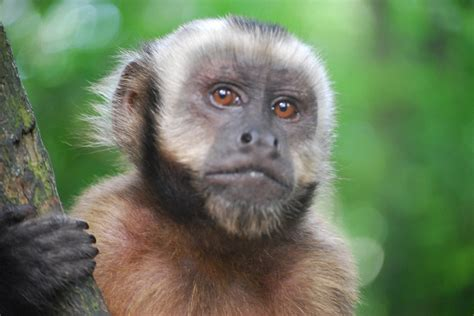 Scientists Clone Two Monkeys as a First Step to Cloning